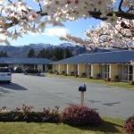 Central Otago spring beauty