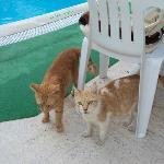 Cats always around the pool and dining area