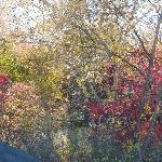 Autumn tints in the back garden