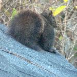 Breakfasting squirrel