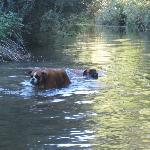 Torrente vicino all'agriturismo dove i cani possono rinfrescarsi