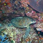 Schildkräte bei Turtle city