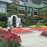 Cafetería rodeada de flores