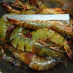 Very Fresh Large Tiger Prawn