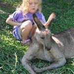 Kangaroo experience