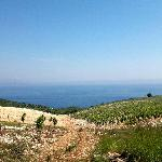 New vineyard