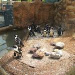 It was hot, felt a bit bad for the penguins:(