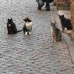 """Feral"" cats at Area Sacra"