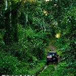 Safaris por la Selva en Cataratas del Iguazú