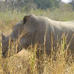 Rhino on a game drive