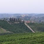 Kilometers Barbaresco's in wording