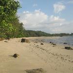 Between ocean and jungle
