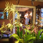 Elegant interior, live orchids in all rooms.
