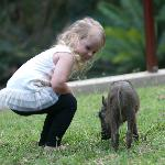 young house guest with the baby Warthog