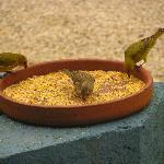 Pássaros vem se alimentar nos comedouros.