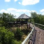Bridge to the viewing platform at Billy's Lodge