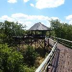 Bridge to the viewing platform at Billy's Lodge