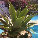 Le piscine di Villa Jantò