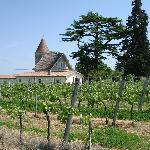 Mesthomas is surrounded with vineyards....