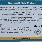 Boardwalk Cat Sign