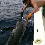 Nice Marlin