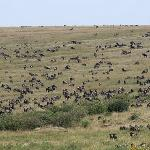 millions of wildebeests