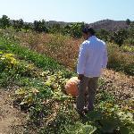 checking out the organic garden