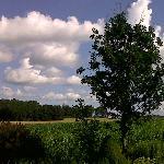 View of fields behind La Passarelle B&B