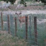 TONS of wildlife - white tail and mule deer, pronghorn, turkeys