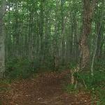 ブナ2次林内の遊歩道
