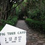 figtreecamp13