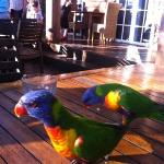 friendly lorikeets
