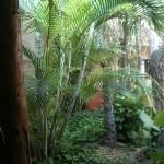 giardino dalla sala colazioni