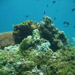 Bommie, Olani Island drift dive