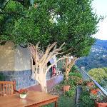 il tavolo della colazione tra alberi di agrumi...