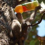 cheeky sod stole my juice!!!
