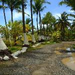 Palm grove and driveway in front of hotel.