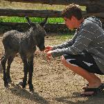 Baby Donkey and our teenage son