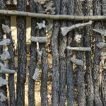 Leopard room - outside fence