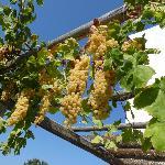 raisins de Swiss Home