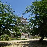 桜と千葉城(郷土博物館)