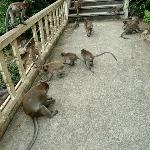Monkey's at the Temple steps