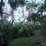 Jardin, Vue de la terrasse