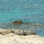 rocky coast-1