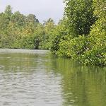 Madu River