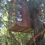the trillium treehouse