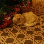 Il simpatico gatto che girava per la hall