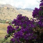 La Valle dei Templi dalla Domus Aurea