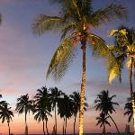 Pretty Palm Trees at Sunset