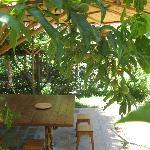 un tavolo tra il verde in giardino